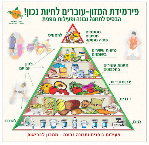 פירמידת המזון - 2008