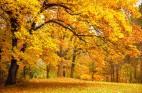 מלנכוליה בסתיו: תזונה נכונה, תוספים ופרחי באך