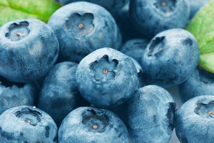 אוכמניות כחולות בריאות