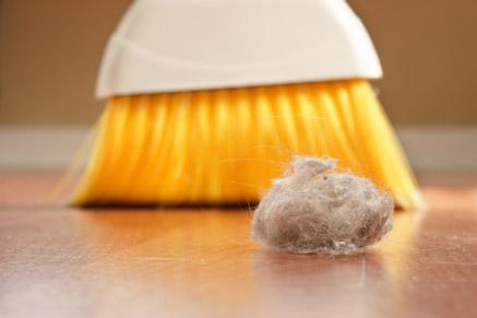 רבים אלרגיים לקרדיט אבק הבית