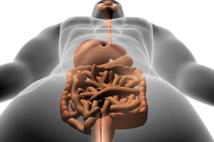 מה אתם יודעים על מערכת העיכול?