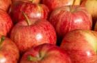 תפוחי עץ: זנים, שימושים ויתרונות בריאותיים