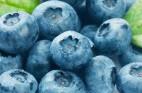 אוכמניות כחולות: כל מה שצריך לדעת