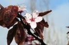 פרחי באך: היכרות אישית ותמציות נוספות