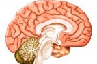 לאכול חכם למוח בריא
