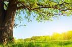 10 מי יודע: המתכונים והבילויים לחג הפסח!